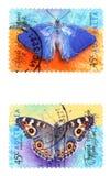 fjärilar Arkivfoto