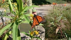 fjärilar Arkivfoton