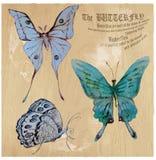 Fjärilar - en hand målad vektor som konverteras royaltyfri illustrationer