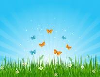 fjärilar field gräs- Arkivfoton