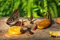 Fjärilar i trädgård arkivbild