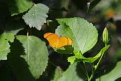 Fjärilar i trädgård royaltyfri bild