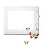 fjärilar inramniner white Arkivbilder