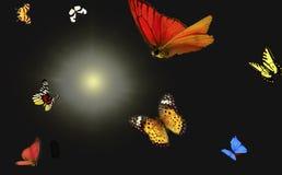 Fjärilar och ljus Arkivfoto
