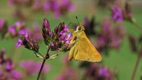 Fjärilar och malar Royaltyfri Fotografi