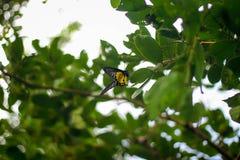 Fjärilar och natur Arkivfoto