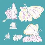 Fjärilar på blommor Arkivfoto