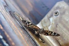 Fjärilar på coopen fotografering för bildbyråer