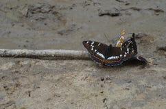 Fjärilar på jordningen Fotografering för Bildbyråer