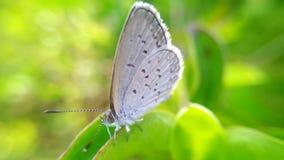 Fjärilar sätta sig på en blad- eller fjärilsfotobakgrund Royaltyfri Bild