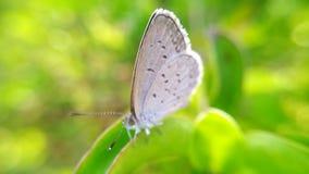 Fjärilar sätta sig på en blad- eller fjärilsfotobakgrund Arkivfoto