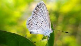 Fjärilar sätta sig på en blad- eller fjärilsfotobakgrund Arkivbilder