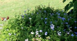 Fjärilar som flyger nära blommor i buske royaltyfria bilder