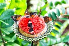 Fjärilar som matar nektar från den stora blomstra blomman Arkivfoton