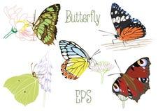 Fjärilar som sitter på Royaltyfri Foto