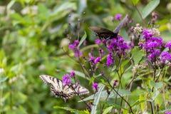 Fjärilar som sitter på en blomma Arkivbilder