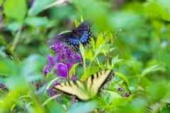 Fjärilar som sitter på en blomma Royaltyfri Fotografi
