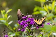Fjärilar som sitter på en blomma Arkivfoto