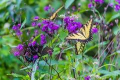 Fjärilar som sitter på en blomma Royaltyfri Bild