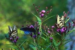 fjärilar tre Arkivfoto