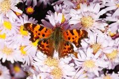 fjärilen blommar monarken Arkivbild