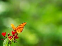 fjärilen blommar red Arkivfoto