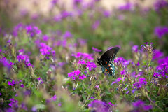fjärilen blommar swallowtail arkivfoto