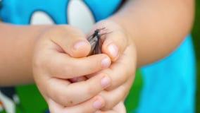 Fjärilen flyger ut ur barnet gömma i handflatan av händerna stock video