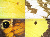 Fjärilen påskyndar texturerar Fotografering för Bildbyråer