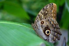 fjärilsägg Arkivfoton