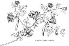 Fjärilsärtan blommar teckningen och skissar med linje-konst Arkivfoton