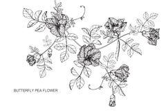 Fjärilsärtan blommar teckningen och skissar med linje-konst Arkivbild