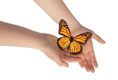 Fjärils- och kvinnas händer. arkivbild