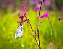 Fjärils- och rosa färgblommor Arkivfoto