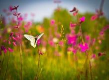 Fjärils- och rosa färgblommor Royaltyfri Fotografi