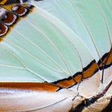 Fjärils vingtextur Arkivbilder