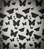 Fjärilsabstrakt begrepp Arkivfoton