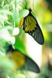 Fjärilsbakgrunden parkerar in av Thailand Royaltyfri Bild