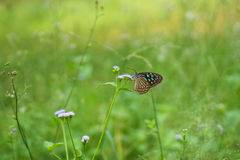 Fjärilsbakgrundsbild Royaltyfri Fotografi