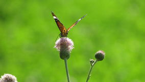 Fjärilsbilder Royaltyfri Foto