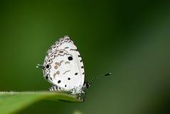 fjärilsblomma Arkivfoton