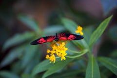 fjärilsblomma arkivbilder