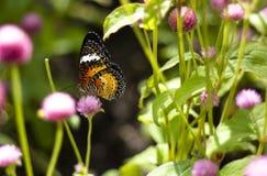 Fjärilsblommor Arkivfoton