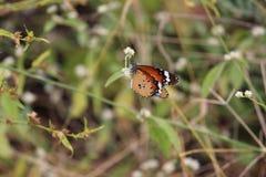 Fjärilscloseupfotografi ser färgrikt fotografering för bildbyråer