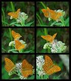 fjärilscollage Arkivfoton