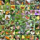 Fjärilscollage arkivbilder