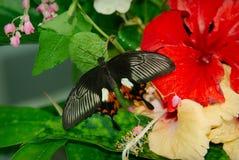 fjärilsdark royaltyfria foton