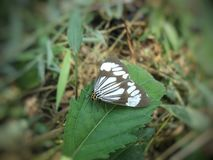 Fjärilsdjur med härliga färger royaltyfria foton
