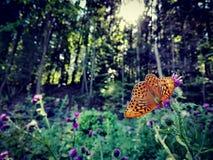 Fjärilseffekt arkivfoto