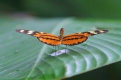 Fjärilsfärger som äter naturen Arkivbild